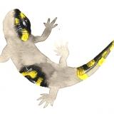 non-fiction-salamandra