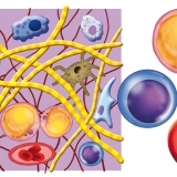 tessuto-connettivo